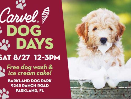 carvel-dog-days-parkland-image